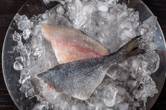 Seafood cooking preparation. Top view of dorado fillet on ice. Stock Photo