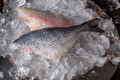Seafood cooking preparation. Top view of dorado fillet on ice. Royalty Free Stock Image