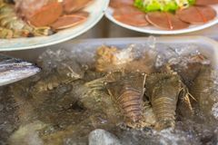 Seafood on the counter of the Thai market. Stock Photos