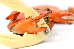 Seafood,crab cracker and boiled crabs prepared Royalty Free Stock Image