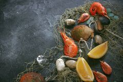 Seafood on a dark background, Shrimps, mussels, mussels on black stone, Copy space royalty free stock photo