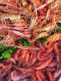Seafood delicacies. Diversity of marine shrimp close-up. background royalty free stock photo