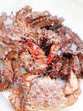 Seafood delicacy northern red crabs close-up on white background. Seafood delicacy northern red crabs close-up on white royalty free stock photography