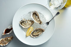Seafood. Delicious oyster with lemon. On white plate and glass wine in the white background Stock Image