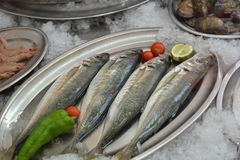 Seafood display Stock Images