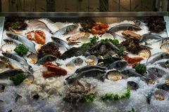 Seafood on display Royalty Free Stock Photo