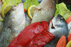 Seafood and fish Stock Photography