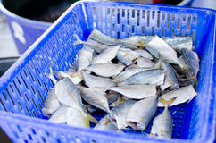Seafood fish . Food for many people of the different countries Royalty Free Stock Photos