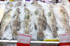 Seafood fish frozen in the ice. For sale Royalty Free Stock Photo