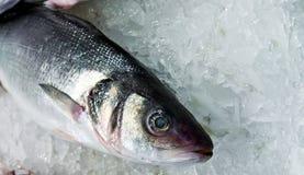seafood fish market seabass crushed ice background stock photography