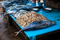 Seafood at the fish market. street food, dining markets, seafood in Sri Lanka. Tuna and shrimp royalty free stock image
