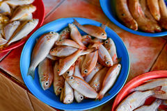 Seafood. Fish Market In Thailand. Healthy Nutrition. Food Backgr. Seafood. Fish Market. Close Up Of Variety Of Fresh Caught Raw Different Species Fish At Market Royalty Free Stock Images