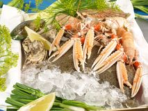 Seafood and Fish in a Box royalty free stock photography