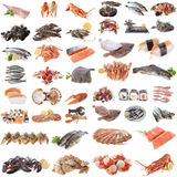 Seafood, fish and shellfish. In front of white background Royalty Free Stock Photo