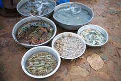 Seafood at the fishing village. A variety of seafood at the fishing village Stock Image