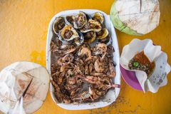Seafood with fresh coconuts Royalty Free Stock Photography