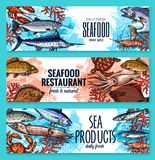Vector seafood banners of sketch fresh fish. Seafood and fresh fish restaurant or fishery product market sketch banners template. Vector sea food squid, turtle Stock Image