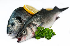 Seafood Fresh fish -  in white 02 Royalty Free Stock Photography