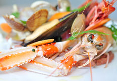 Seafood Stock Images