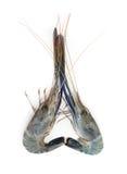 Seafood fresh shrimp isolated on white Royalty Free Stock Image