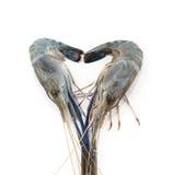 Seafood fresh shrimp isolated on white Stock Photography