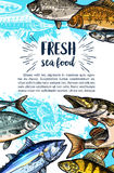 Seafood and freshwater fish sketch banner. Seafood and freshwater fish banner. Salmon, tuna, marlin, pike, perch, carp, trout, cod and flounder fish sketches and Stock Images