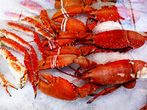 King Crabs Royalty Free Stock Photos