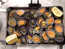 Seafood grill Stock Image
