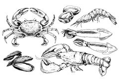 Seafood hand drawn collection Royalty Free Stock Photo