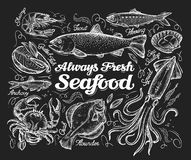 Seafood. Hand drawn sketch of a fish, trout, flounder, herring, squid, crab, anchovies, shrimp, scallop. vector