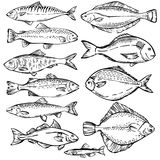 Seafood. Hand drawn sketch illustration of different fish. Seafood design elements. Seafood / fish menu. Ink illustration. engraving fish isolated on white Stock Image