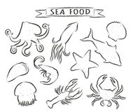 Seafood hand drawn vector illustrations isolated on white background, elements for restaurant menu design, decor, label. Grunge contours of sea animals Stock Photo