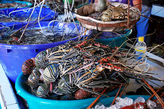 Seafood in haunch royalty free stock photography