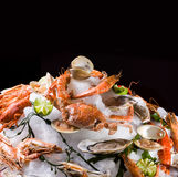 Seafood on ice. Stock Images