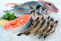 Seafood on ice. At the fish market Royalty Free Stock Photography