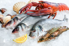 Seafood on ice. Fresh catch of fish and other seafood on ice stock photo
