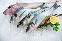 Seafood on ice. At the fish market Stock Image