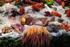 Seafood in ice Royalty Free Stock Photos