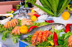 Seafood on the ice Royalty Free Stock Photo