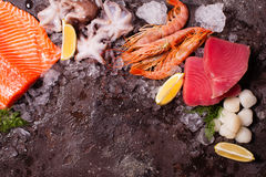 Seafood on the ice. Border top view with empty space for text Royalty Free Stock Photos
