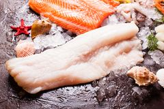 Seafood on the ice. Cod fillets close up on the brown slate background Stock Photos
