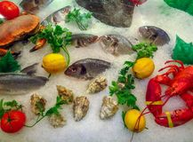 Seafood on ice. At the fish market Royalty Free Stock Photo