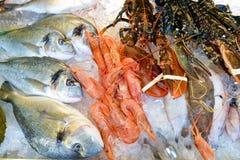 Seafood on ice Stock Photos