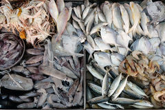 Seafood on ice. At the fish market Royalty Free Stock Image