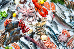 Seafood on ice. At the fish market stock photos