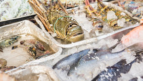 Seafood on ice at the fish market.  Stock Photography