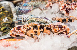 Seafood on ice at the fish market.  Royalty Free Stock Photos