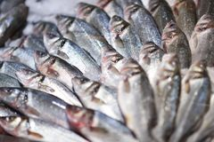Seafood on ice at the fish market.  Stock Image