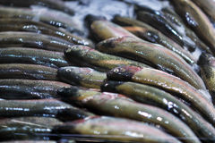 Seafood on ice at the fish market.  Royalty Free Stock Photography