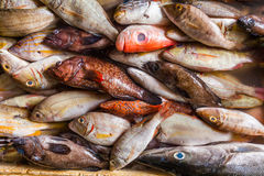 Seafood on ice at the fish market. Bali Stock Photography